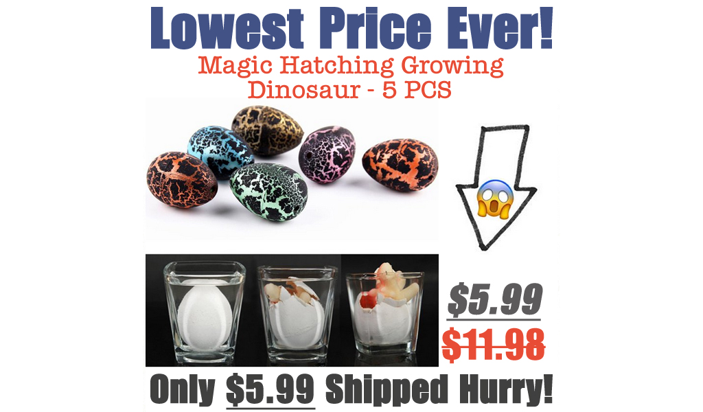 Magic Hatching Growing Dinosaur - 5 PCS Only $5.99 Shipped on Walmart.com (Regularly $11.98)