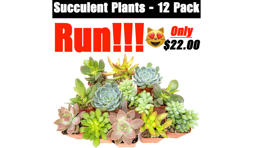 Succulent Plants - 12 Pack Only $22.00 Shipped on Amazon (Regularly $29.99)